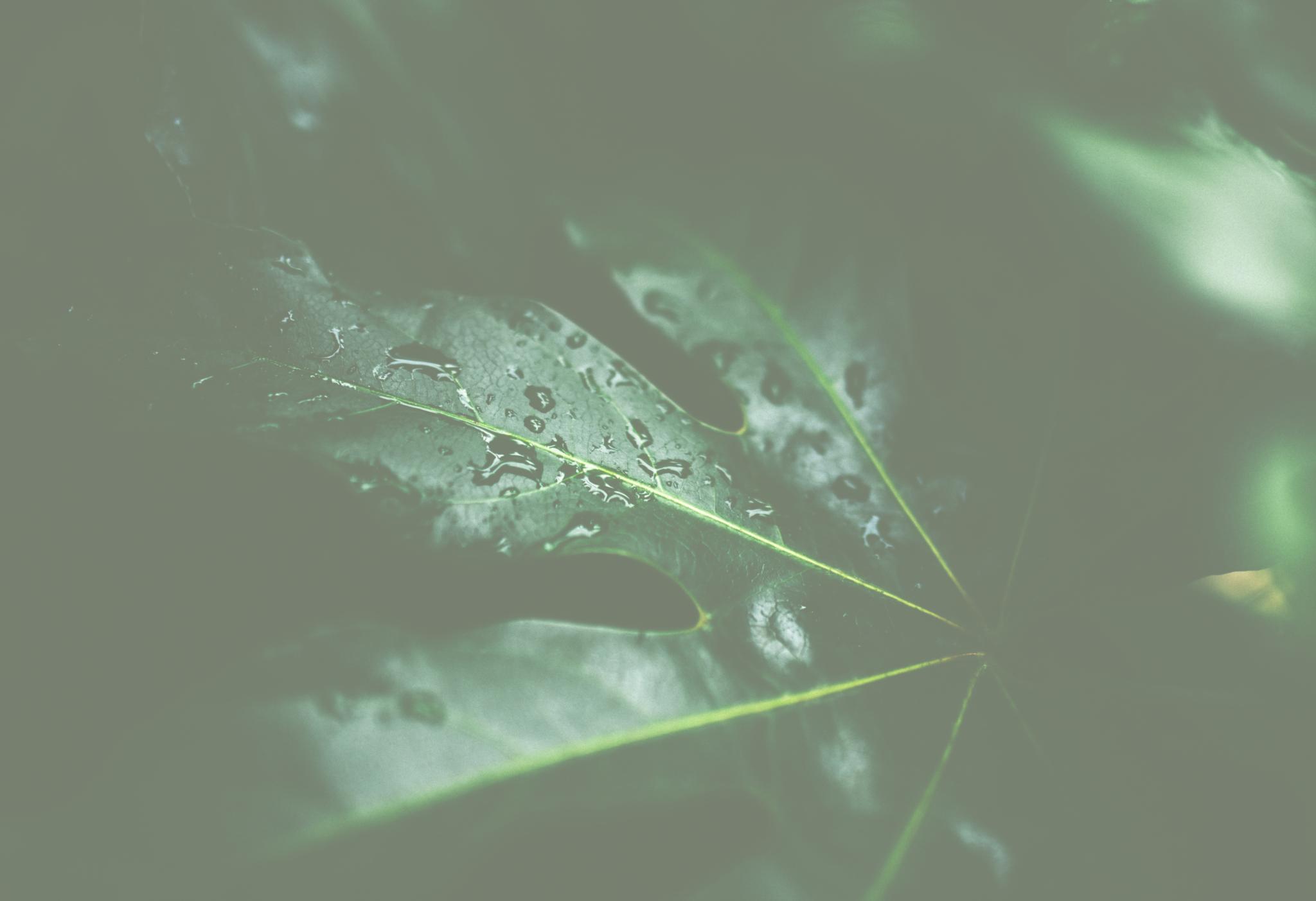 blatt grün gefühle